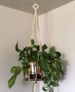 macrame plant hanger with redwood